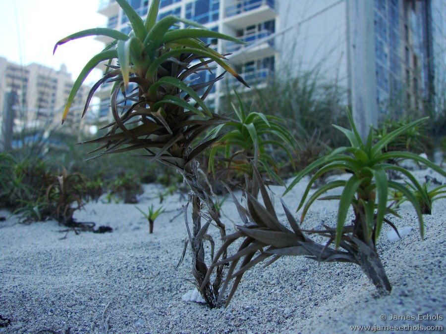 070210 Miami Beach Arts Fest Micro Trees 001